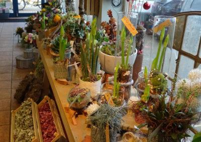 Pflanzen in Gefäßen