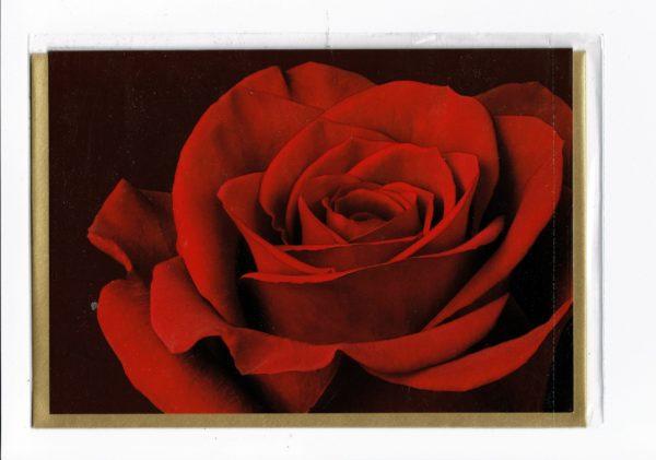 Motivkarte Rote Rose